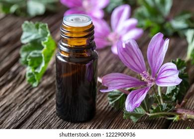 A bottle of mallow essential oil with fresh malva sylvestris plant
