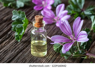 A bottle of mallow essential oil with fresh blooming malva sylvestris plant