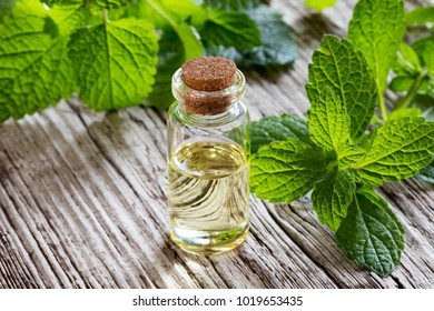 A bottle of melissa (lemon balm) essential oil with fresh melissa twigs on a wooden background