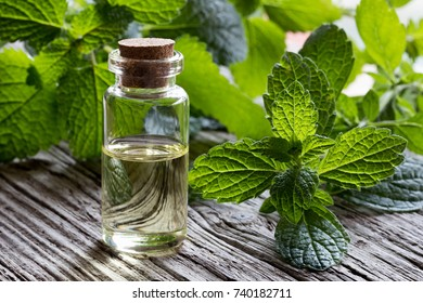 A bottle of melissa (lemon balm) essential oil with fresh melissa leaves on white painted wood
