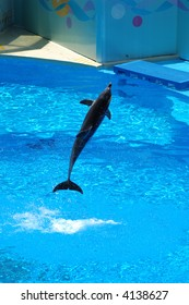 Bottle nose dolphin jump up in the water