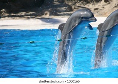 Bottle Nosed Dolphins at Loro Parque