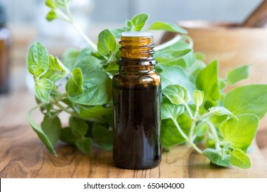 A bottle of oregano essential oil with fresh oregano leaves in the background