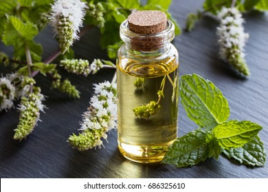 A bottle of peppermint essential oil with fresh peppermint leaves and flowers in the background