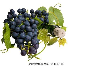 bottle of red vine