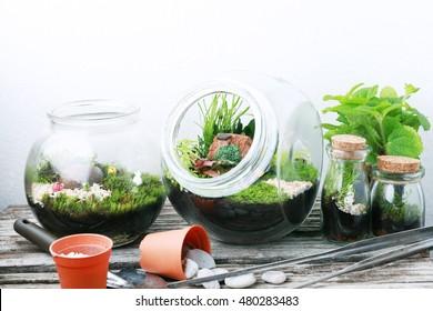 Bottle terrarium with Miniature succulent plants.