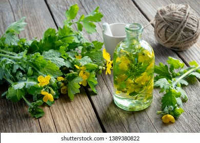 A bottle of tetterwort tincture or oil and fresh Chelidonium majus plant.