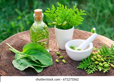Bottle of Thuja infusion or oil, mortar and plantain leaves. Herbal medicine.