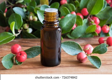 A bottle of wintergreen essential oil with wintergreen twigs on a wooden background