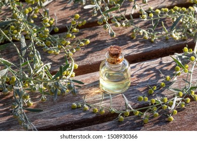 A bottle of wormwood essential oil with blooming Artemisia Absinthium plant on a wooden background