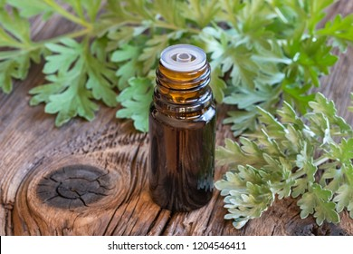 A bottle of wormwood essential oil with fresh Artemisia Absinthium plant