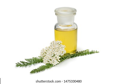 Bottle of yarrow oil and fresh white Common yarrow flowers isolated on white background