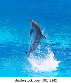 Bottlenose dolphin jumping high from bue water