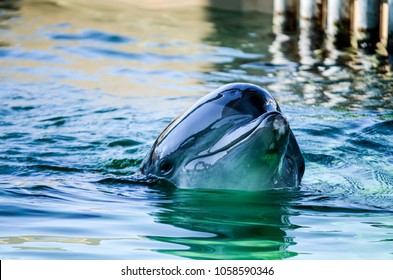 Bottlenose Dolphins Habitat