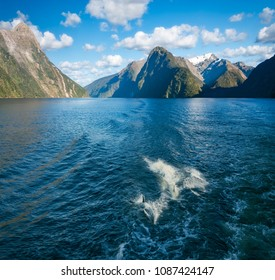 Bottlenose dolphins swimming along playfully behind a cruise boat in the fjord at Milford Sound, Fiordland National Park, New Zealand, South Island.
