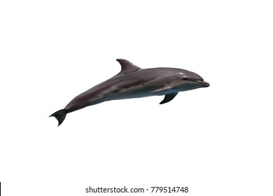 Bottlenose dolphin(Tursiops truncatus) jump to the sky on white isolated background with clipping path