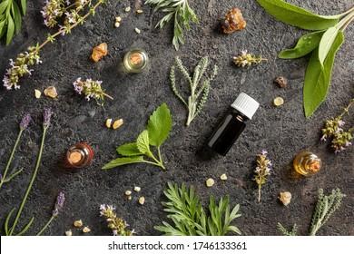 Flaschen ätherischen Öls mit Weihrauch, Melisse, blühenden Thymian, Lavendel und anderen Kräuter