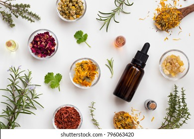 Bottles of essential oil with fresh and dried herbs a white background