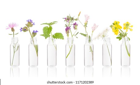 Bottles of essential oil with fresh herbs. Bottle herbs on white. FLORITERAPIA Bacha.