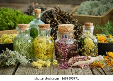 Bottles of infusion of healthy medicinal herbs and healing plants on wooden table. Comarum palustre stems and roots, healthy moss and lichen on background.  Herbal medicine.