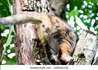 Bottom of cute little cat playing on dry tree.