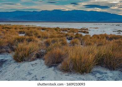 The bottom of a dried up salt lake with growing bushes is taken in the evening against the background of mountains,USA
