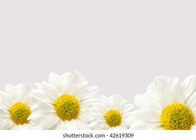 a bottom edge border of vibrant white and yellow daisies
