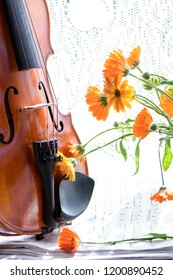 Bottom half of a violin with sheet music and flowers the front of the fiddle on windows.