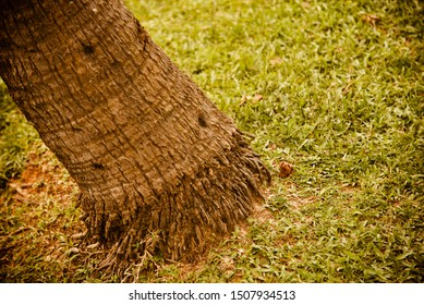 Bottom parts of an old tree with green grass background