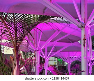 From the bottom, purple-colored umbrellas in the evening on the promenade of the Playa americas on tenerife, a tourist center in the south of the island