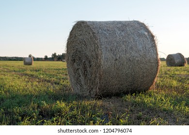 bottom view of a bale of hay twisted into a roll for cattle feed, field in summer blue sky at sunset
