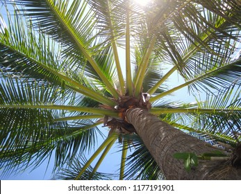 Bottom view of coconut tree with sunny and blue sky in Thailand