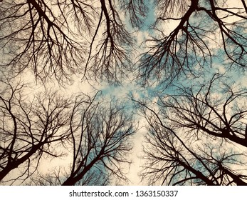 Bottom view of the crowns of trees without leaves against a cloudy sky