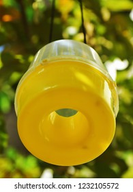 Bottom up view of an insect pheromone trap, hanging from a guava tree in a fruit farm.