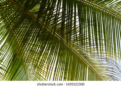 Bottom view leaf of coconut palm tree. Green background. Travel summer template.