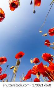Grundansicht der Pupien, die einen Bilderrahmen mit dem blauen Himmel eines sonnigen Tages bilden