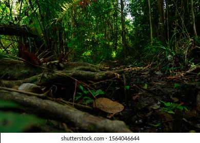 bottom view scenery of jungle in Thailand