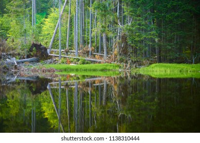 Boubin lake. Reflection of lush green trees of Boubin Primeval Forest, Sumava Mountains (Bohemian Forest National Park), Czech Republic.
