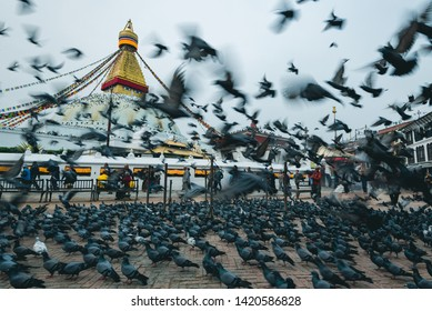Boudhanath stupa, Kathmandu, Nepal - April 2019, The pigeons were flying in front of Boudhanath stupa in the morning with people who feed them and walk around the stupa