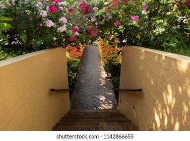 Bougainvillea Flower Canopy Over Outdoor Staircase