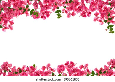 Bougainvillea flower frame on white background ,Provincial flower of phuket thailand