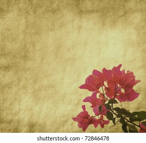 Bougainvillea flowers on Grunge Abstract Background