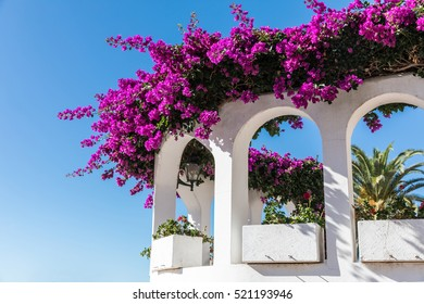 Bougainvillea on a balcony