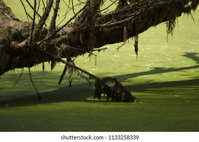 Bough with shadow over the water of a small lake