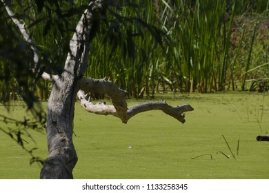 Bough in the sunlight over a small green lake