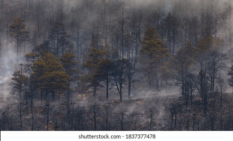 BOULDER, CO, USA - OCTOBER 18, 2020: Trees burned in the foothills of the Rocky Mountains the day after the largest wildfire in Boulder County history raged through neighborhoods northwest of Boulder