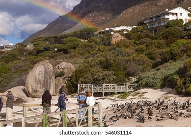 Boulders Beach is a popular tourist stop because of a colony of African penguins in Simon's Town, South Africa.