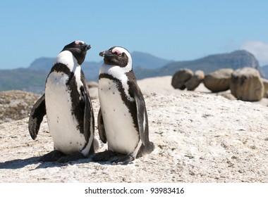 Boulders Penguins Cape Town