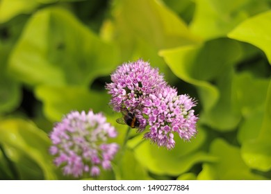 Boulogne-sur-mer, France -August 2019 : Flower and a bee