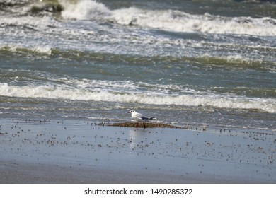 Boulogne-sur-mer, France - August 2019 : Gull on the beach